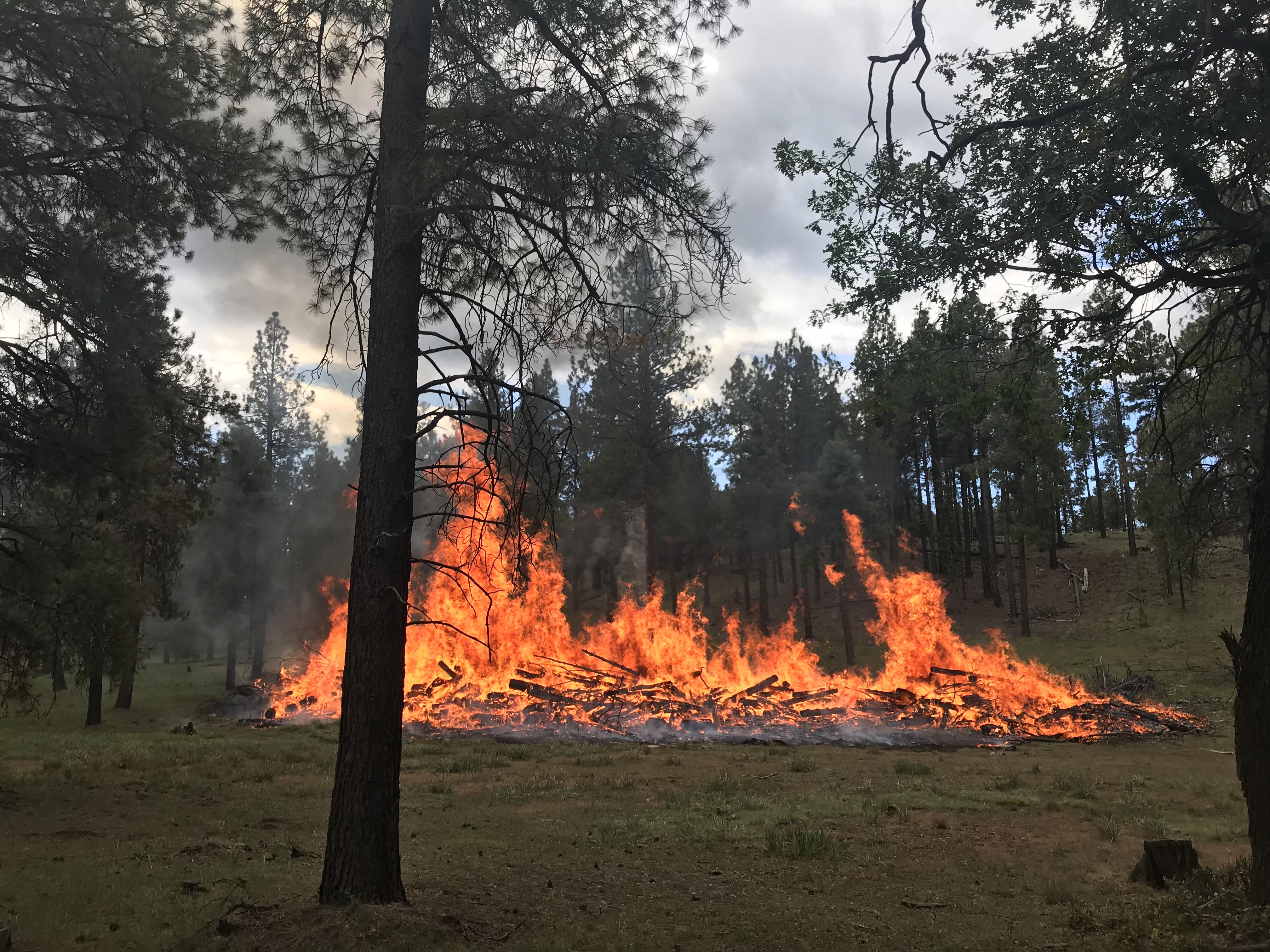 Flagstaff Tornado Pile Burn Project